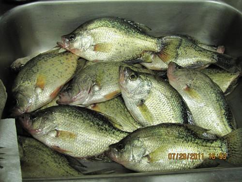 Western pa fishing report fish pittsburgh for Pymatuning fishing report
