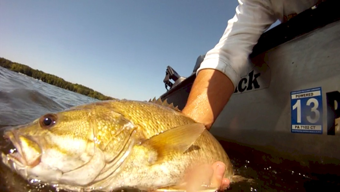 Summertime smallies fish pittsburgh for Pymatuning fishing report