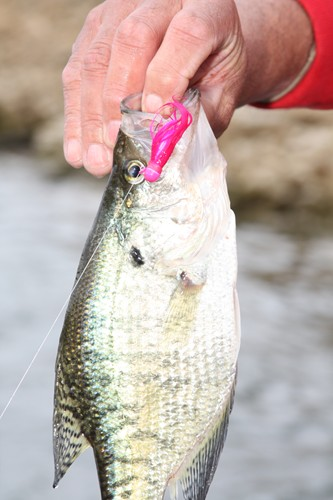 Kahle lake fish pittsburgh for Lake wilhelm fishing