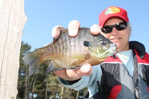 Northwest pennsylvania fishing report 10 3 11 fish for Lake wilhelm fishing