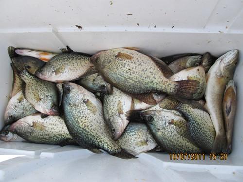 Northwest pennsylvania fishing report 10 10 11 fish for Pymatuning fishing report